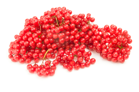 guelder rose berry: Bunch of red berries- guelder rose isolated on a white background with clipping path