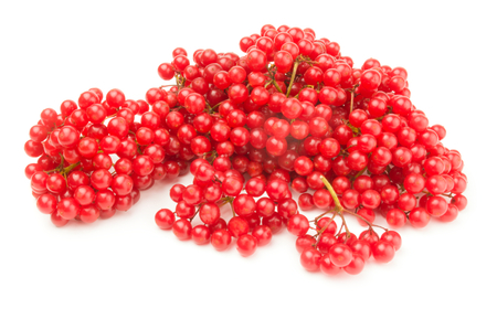 guelderrose: Bunches of red viburnum isolated on a white background with clipping path