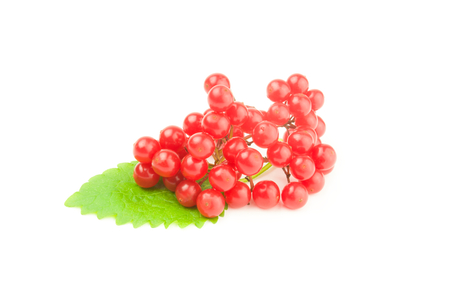 guelderrose: Red berries of a guelder-rose isolated on a white background cutout Stock Photo