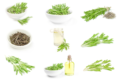 Group of rosemary Stock Photo