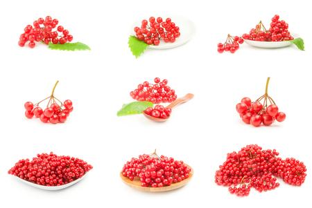 Set of viburnum berries isolated on white Stock Photo