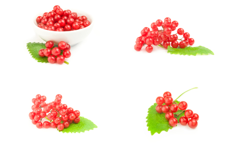 Set of bunch of red berries- guelder rose isolated on a white background with clipping path