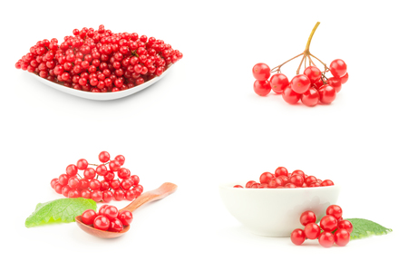 Set of arrowwood berries close-up isolated on white background