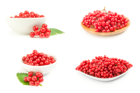 Collection of pimbina berries on a white background clipping path