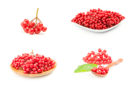 Group of red berries of a guelder-rose Stock Photo