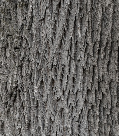 Tree bark texture . Texture for background