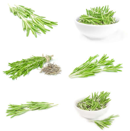 Collage of rosemary on a white background cutout Reklamní fotografie - 159580599