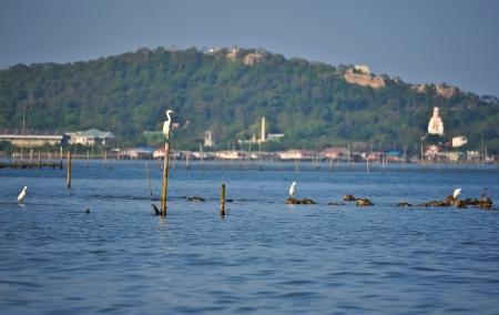 sequester: bird on beach Stock Photo