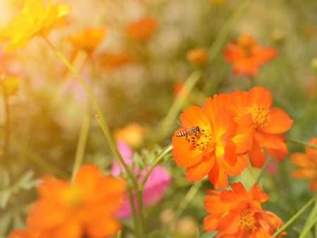bee busy drinking nectar from the flower