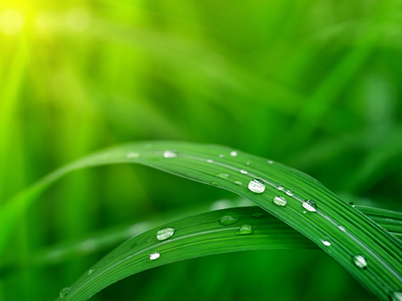 water drop on leaf with sunlight background 스톡 콘텐츠