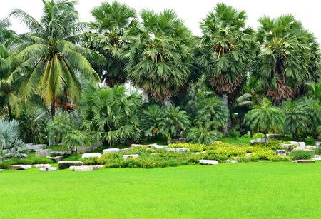 tropical garden: the tropical garden palm tree Stock Photo