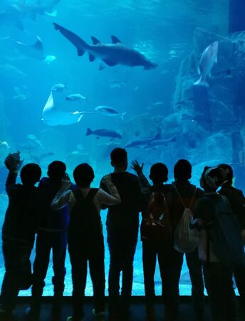 aquarium watchers silhouette against turquoise clear water Istanbul turkey
