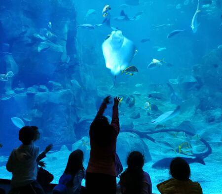 aquarium watchers silhouette against turquoise clear water Istanbul turkey Foto de archivo