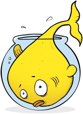 Un pez dorado gigante que ha superado su cuenco