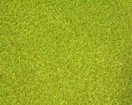ground cover: Grass Stock Photo