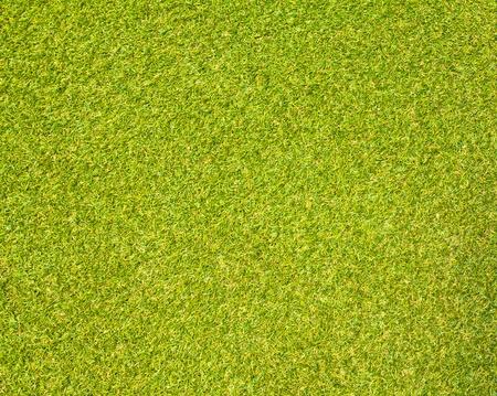grassy: Grass Stock Photo