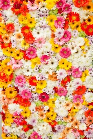 yellow daisy: Gerbera Daisy