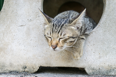 Lazy puppy cat., small cat with copy space for text., animal concept. kitty concept. Stock Photo
