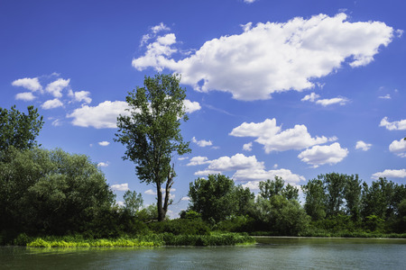 Single populus tree on a river bank with beautiful blue sky 版權商用圖片
