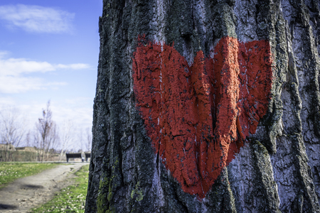 Red heart on tree bark with two benches and blue sky in the background