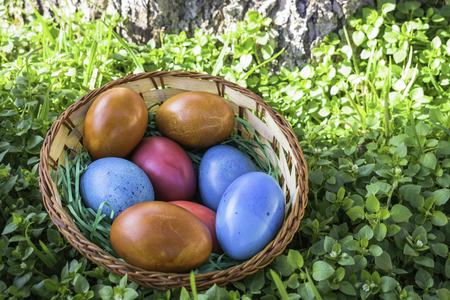 Closeup of different color Easter eggs in a basket laying in grass under a tree Фото со стока