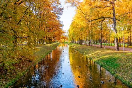 Autumn foliage in Alexander park, Tsarskoe Selo (Pushkin), Saint Petersburg, Russia