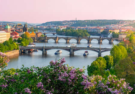 Blooming lilac in Letenske garden with Prague evening cityscape and bridges over Vltava river at background, Czech Republic