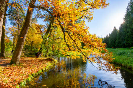 Oak tree in autumn in Catherine park, Pushkin, Saint Petersburg, Russia Stockfoto