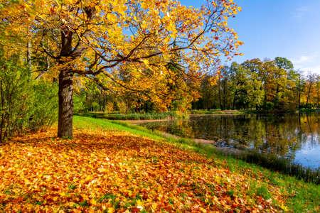 Golden autumn (fall) in Alexander park, Tsarskoe Selo (Pushkin), Saint Petersburg, Russia