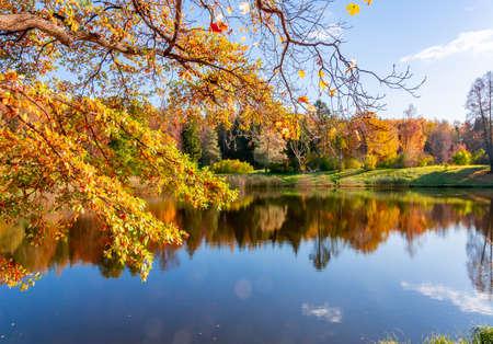 Autumn foliage in Pavlovsky park, Pavlovsk, Saint Petersburg, Russia Banco de Imagens