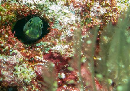 peekaboo: Fish playing peek a boo in Raja Ampat