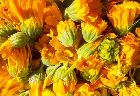 Beautiful photo with   flowers calendula.Selective focus. Imagens