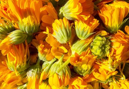 Beautiful photo with   flowers calendula.Selective focus. Stock Photo