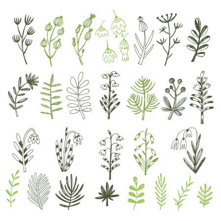 Big set of flowers and herbs. Vector collection leaf. Hand Drawn vintage floral elements.