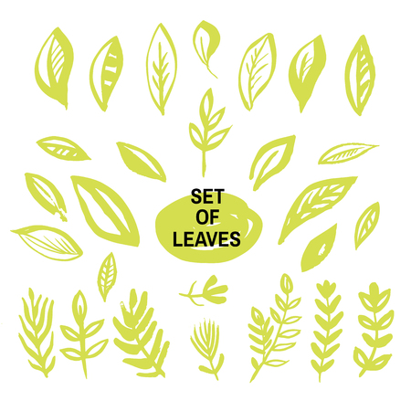 Big set of green leaves. Vector collection leaf. Hand Drawn vintage floral elements.Perfect for wedding invitations and birthday cards. Universal templates collection for trendy design.