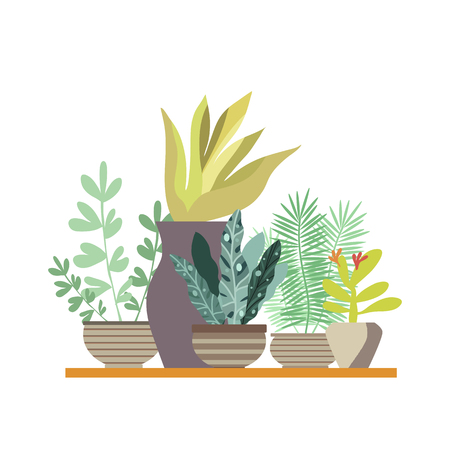 Home room and office plants in pots. Cactus and tropical leaves. Cute  vector elements in flat cartoon style. For your design, posters, textile, wedding invitation, business products.  Vector illustration.
