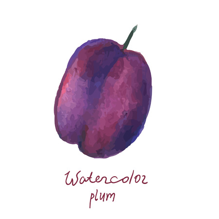 Watercolor plum in vector Vector