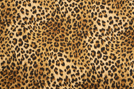 wild animal pattern background or texture