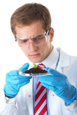 young lab assistant holds small flat dish with soil and plant, wears blue protection gloves,  isolated on white photo