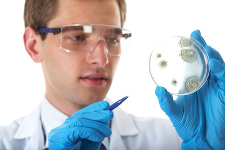 young male laboratory assistant check petri dish with agar and bacterium on it, isolated on white photo