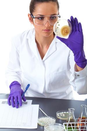 microbiologia: investigador de laboratorio trabaja en la bacteria placa de Petri, aislado Foto de archivo