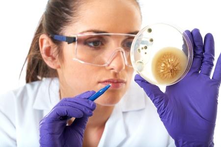 bacterias: joven ayudante de laboratorio atractivo ver una caja de petri con agar y la bacteria en �l, aislados en blanco