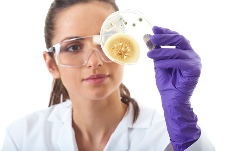 young attractive laboratory assistant check petri dish with agar and bacterium on it, isolated on white photo