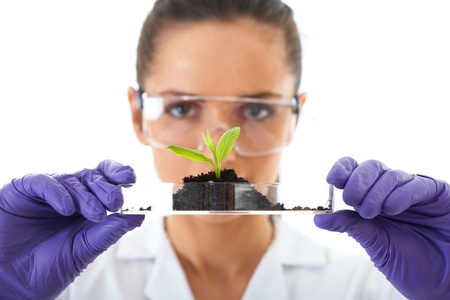 Research and development: young lab assistant holds small flat dish with soil and plant, wears violet protection gloves,  isolated on white