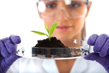 young lab assistant holds small flat dish with soil and plant, wears violet gloves, isolated on white photo