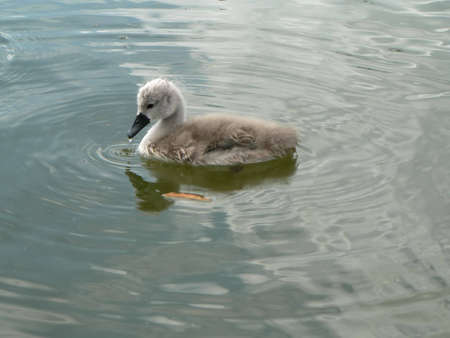 cosily: littel swam Stock Photo