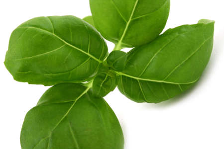 basil leaves on white background natural minimal shadow underneath