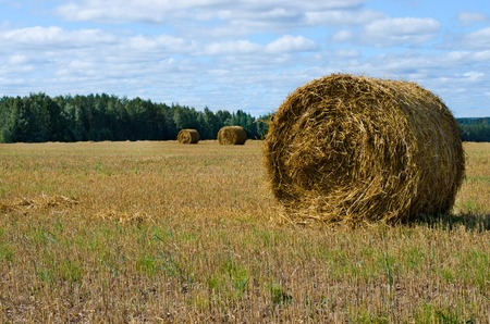 Hay bale. Rural landscape with blue sky. Harvesting straw in the meadow. Banco de Imagens
