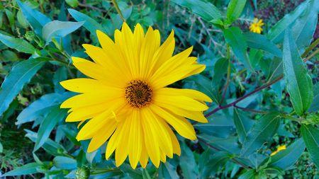 노란 꽃 스톡 콘텐츠