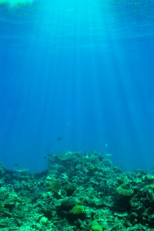 gentle dream vacation: Underwater life with sun rays trough water.